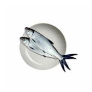 BANDENG FISH FROZEN 200-300GM