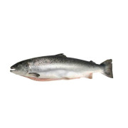 Salmon China Rich in omega-3, protein and vitamins