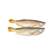 Yellow Croaker China rich in nutrients