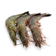 Frozen Jumbo Prawn MALAYSIA Pleasantly sweet flavour and firm texture